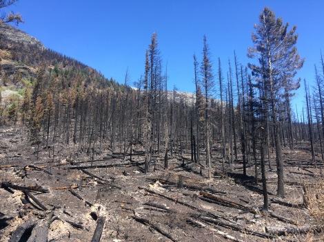 Reynolds Creek Fire, Glacier National Park (2015)