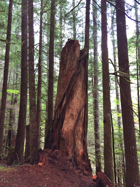 This was a tree... growing out of a dead tree. I dubbed it the